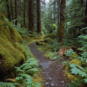 Trail in Temperate Rainforest
